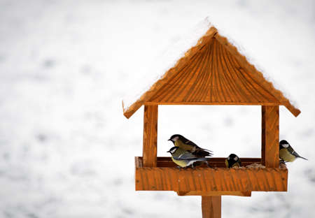 birds in hand made animal feeder, winter time photo