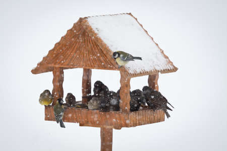 winter birds in animal feeder photo