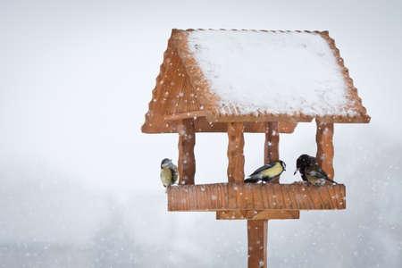 winter birds in wooden animal feeder photo
