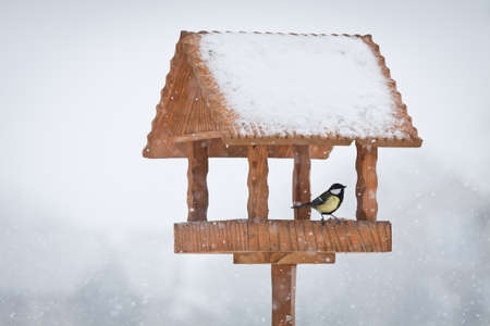 winter bird in animal feeder photo
