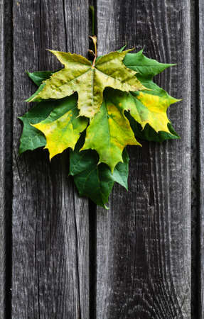 green yellow  leaves ecology concept