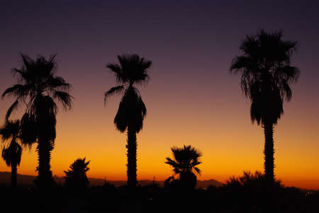 Arizona sunset with palms