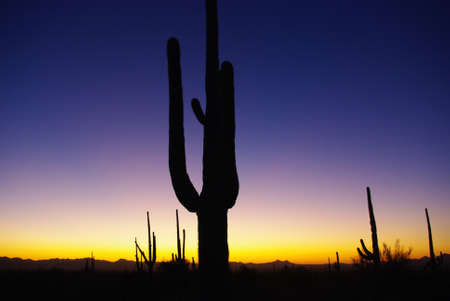 arizona sunset: Arizona sunset with saguaros