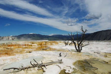 Dry trees, Mammoth Terraces, Yellowstone National Park, Wyoming Stock Photo - 12520704