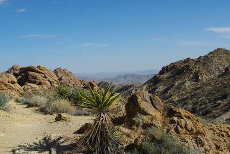 Yuccas, Rocks and Mountains, Joshua Tree National Park, California Stock Photo - 12520946