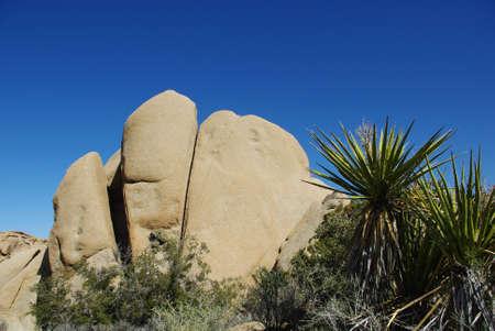 Rock formation and yucca, Joshua Tree National Park, California Stock Photo