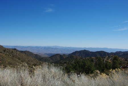 Shrub and wide open mountain view, Northern Arizona