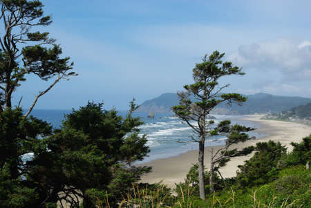 Wind bent trees, beach, waves and cliffs, Pacific Coast, Oregon photo