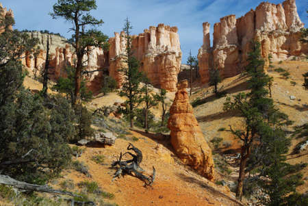 Dry logs, trees and fantastic rock torrets in Bryce Canyon National Park, Utah Stock Photo
