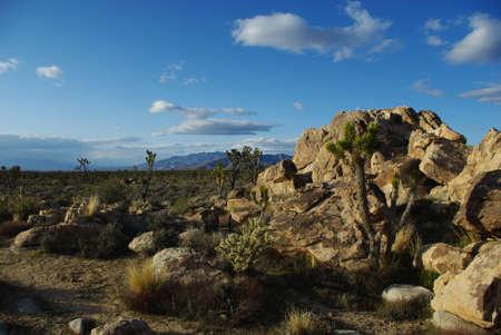 us sizes: Joshua trees, cholla cactus and rocks with mountain view near Cima, Providence Mountains, California