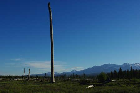 bowman: Tronchi d'albero secco vicino a Bowman Lake e Canada confine, Montana
