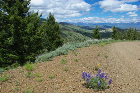 challis: Flowers on gravel road with view of hills, vast valleys and Hawley Mountains, Challis National Forest, Idaho