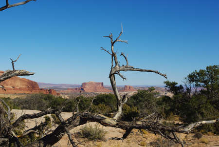 Dry tree, forest and red buttes near Canyonlands National Park, Utah