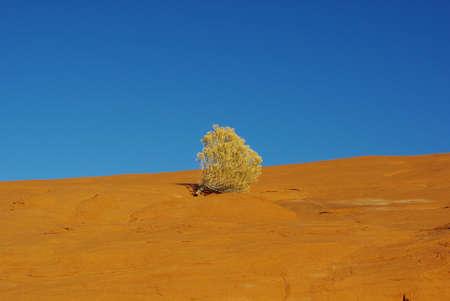 the devils garden: Lonely plant on orange rock plateau under blue sky, Devils Garden, Utah