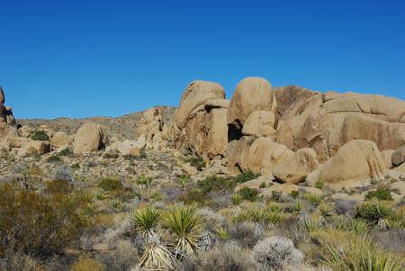 plantas del desierto: Las plantas del desierto y las formaciones de roca, Parque Nacional Joshua Tree, California Foto de archivo
