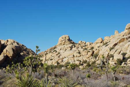 joshua: Yucca, Joshua and rock formations, Joshua Tree National Park, California