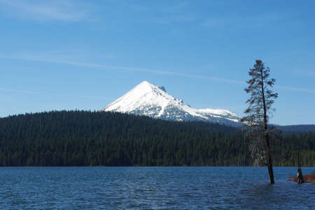 Lonely tree in Lake of the Woods with Mount McLoughlin, Oregon