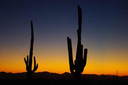 Saguaro sunset near Tucson, Arizona