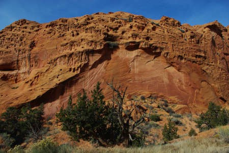 Dry tree with green plants and red rock wall under blue sky, Grand Stair Escalante National Monument, Utah Stock Photo - 12900949