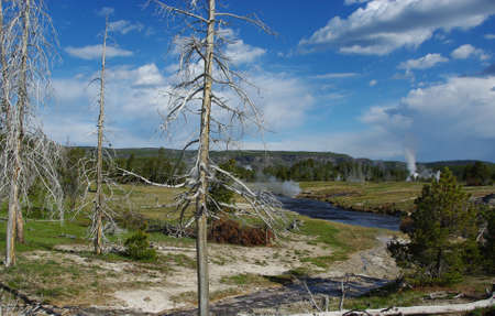 Tree, river, geysers and fumaroles, Yellowstone National Park,Wyoming Stock Photo - 12963823