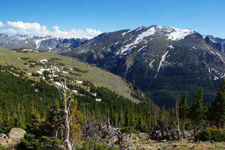 Dry trees, forests and high Rockies, Colorado Stock Photo - 12948113