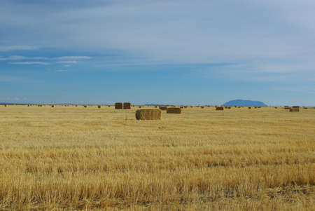 dispersed: Hay, wide plains and dispersed mountains, Idaho