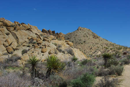 Joshua Tree National Park impression, California photo
