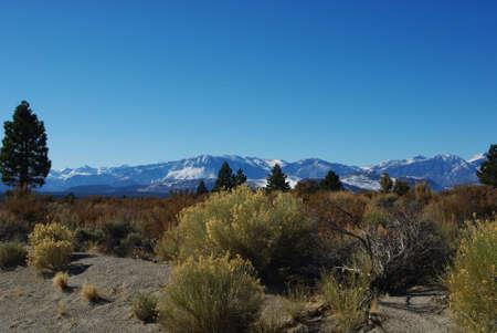 plantas del desierto: Hermosas plantas del desierto y la gama alta monta�a nevada, California