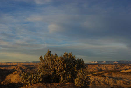 national plant: Plant and canyons in the early morning, Grand Stair Escalante National Monument, Utah Stock Photo