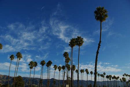 Palms in Santa Barbara, California Stock Photo