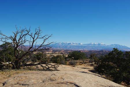 Trees, rocks and Manti La Sal Mountains, Utah photo