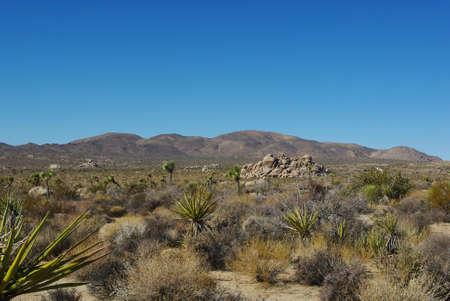 Yucca, Joshua, and interesting rock formations, Joshua Tree National Park, California photo