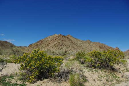 Yellow flowers and rocks, Joshua Tree National Park, California