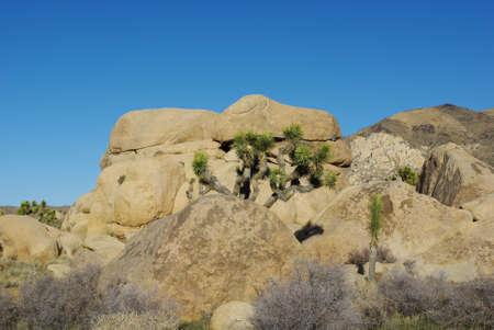 Beautiful rocks and Joshua, Joshua Tree National Park, California Stock Photo