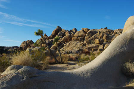 Joshua Tree National Park, California photo