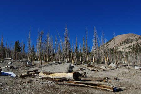 high sierra: Dry high Sierra forest under blue sky, California Stock Photo