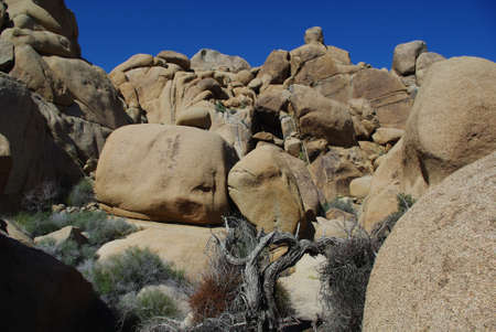 Dry tree and rock, Joshua Tree National Park, California Stock Photo - 13641802