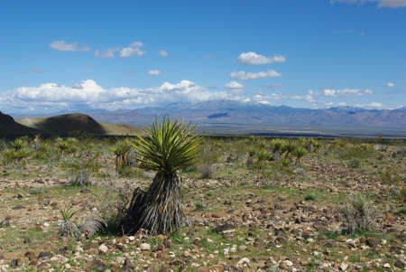 Yucca with view on high desert and mountains, Arizona Stock Photo - 13641789