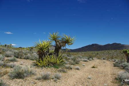 plantas del desierto: Las plantas del desierto, Nevada
