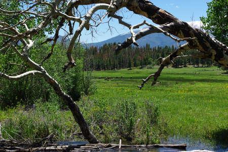 rocky mountains colorado: River, dry trees, meadows, elks and Rocky Mountains, Colorado
