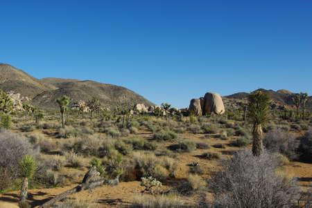 Yucca, Joshua and rocks, Joshua Tree National Park, California photo