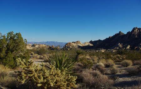 plantas del desierto: Las plantas altas del desierto, rocas y vista, Nevada