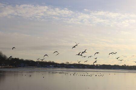 Birds flying over ocean
