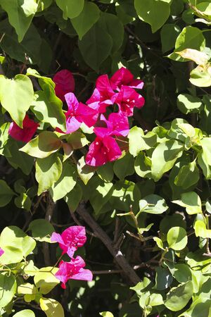 pink flowers on a shrub