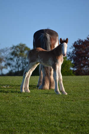perpendicular: Foal stands perpendicular
