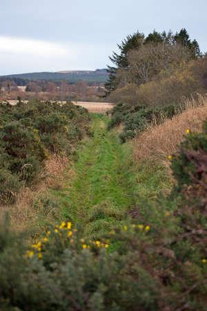 rambling: Ramblers path
