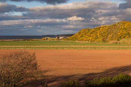 ploughed: Yellow gorse hillside before ploughed farmland Stock Photo