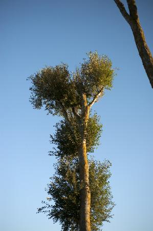 lonley: lonley tree in blue background