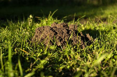 molehill: This is a big problem of every farmer, animals creating molehills
