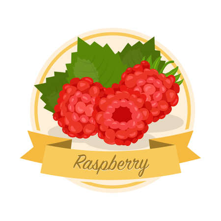 Ripe raspberries with name vector illustration